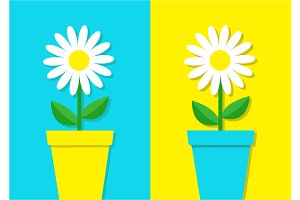 White daisy chamomile flower  icon.