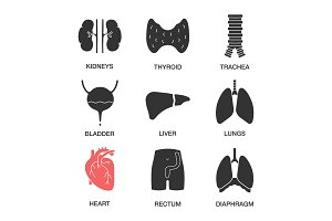 Human internal organs icons set