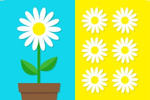 White daisy chamomile icon set. Pot