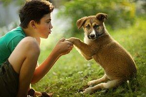 teenager boy hug puppy shepherd dog