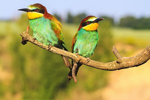 pair of exotic birds resting on a