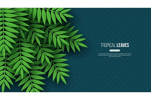 Exotic jungle tropical palm leaves