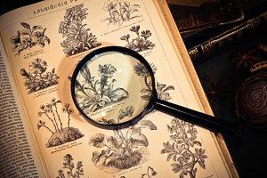 Old Botanic book