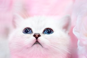 Little cute white cat