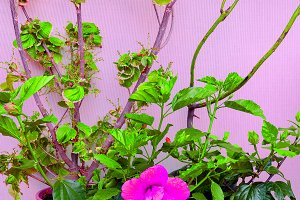 Flowers on pink wall background. gar