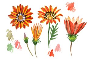 Wildflower orange gazania PNG set