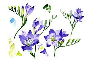Aquarelle purple freesia PNG flower