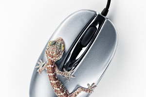 on mouse