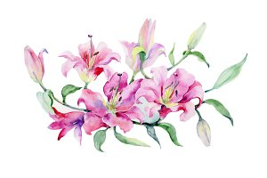Bouquet of pink lilies PNG set