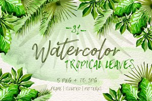Watercolor tropical leaves PNG set