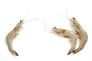 Raw fresh tiger shrimp on white