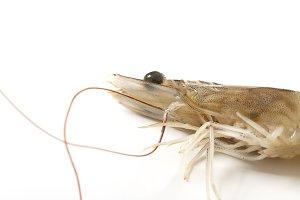Raw fresh tiger shrimp on white