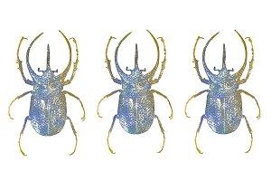 Escarabajo estampado