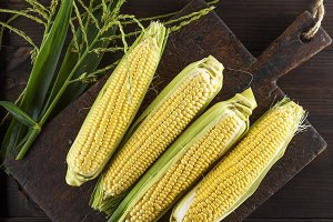 fresh ripe corn cobs