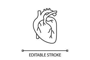 Human heart anatomy linear icon