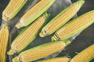 lot of fresh ripe corn cobs