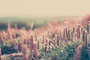 wild grass bokeh