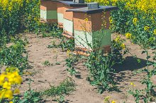 Hives of bees