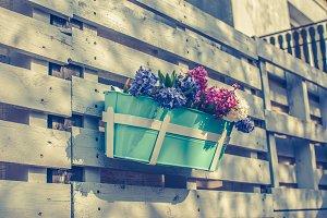 Hyacinths in a pot
