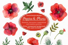 Poppies and wild plants