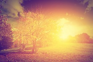 Autumnal landscape. Vintage