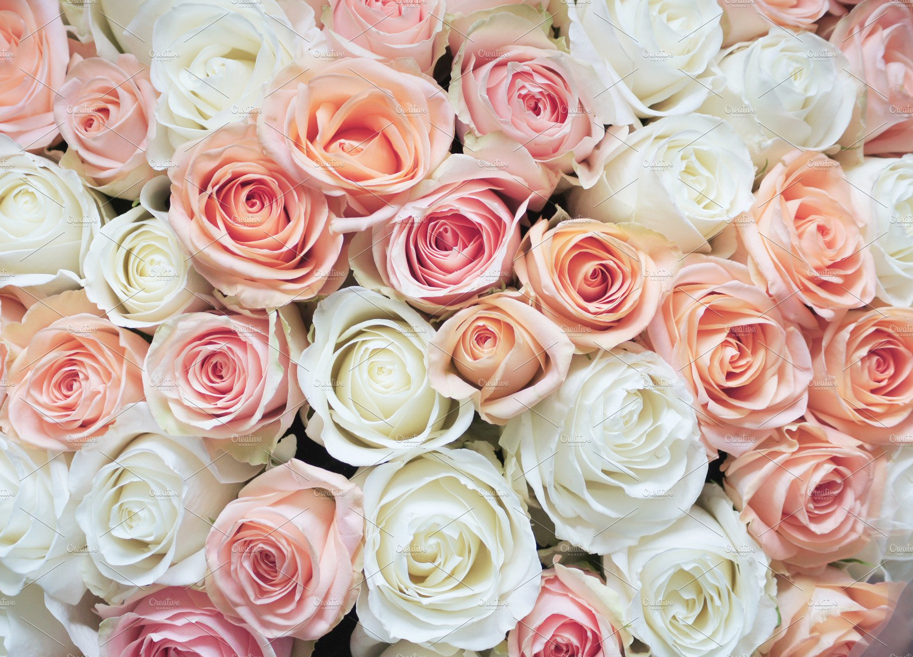 White and Pink Roses Background ~ Beauty & Fashion Photos ...