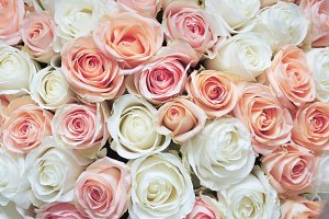 White and Pink Roses Background