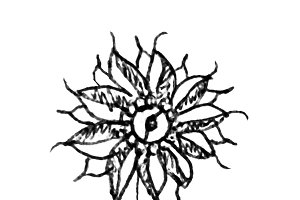 Isolated Hand Drawn Flower
