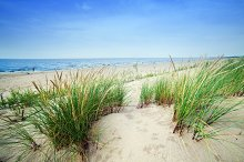 Beach with dunes and green grass