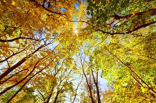 Colorful leaves on trees in autumn