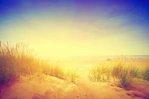 Beach with dunes and grass. Vintage