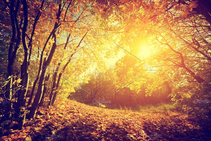 Autumnal park landscape. Vintage - Nature