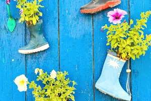 Old rubber boots with blooming flowe