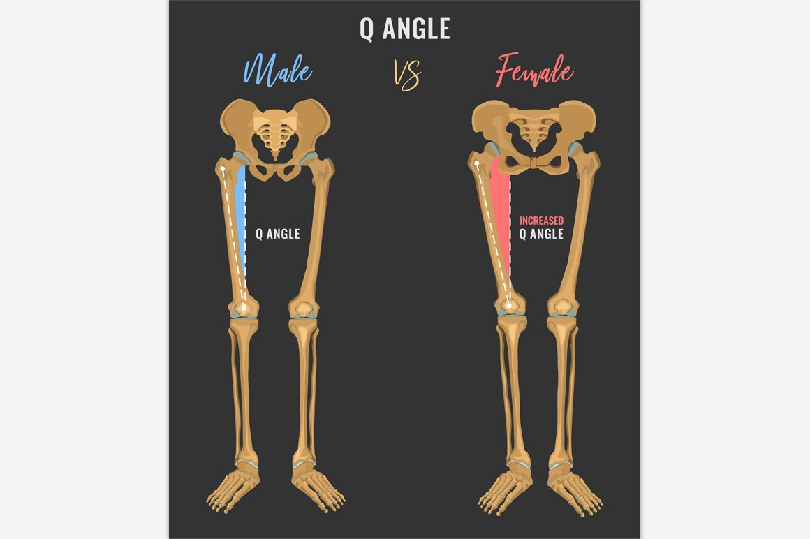 female and male skeleton differences illustrations