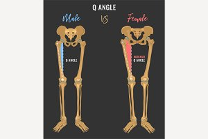 Female and male skeleton differences
