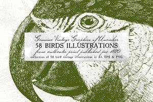 58 Birds Illustrations