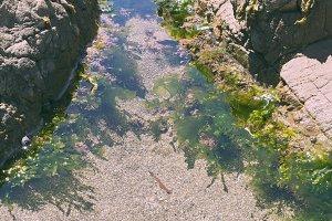Green Seaweed at Tidal Inlet Pool