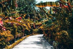 Tropical lane in jungle resort
