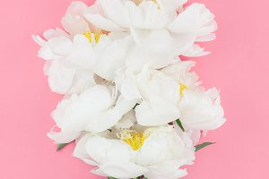 Blooming white peony flowers