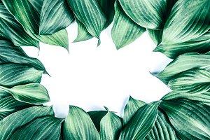 Fresh juicy textured green leaves