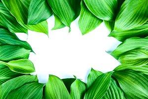 Fresh juicy textured green leaves wi