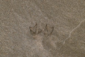 Traces of a seagull on the sand by