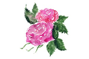 Watercolor rose flower bud isolated