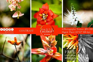 Wild flowers photograph bundle