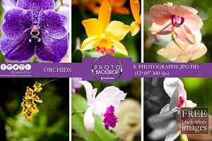 Orchids photography flowers