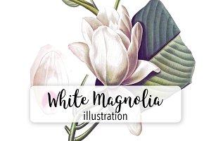 Florals: White Magnolia