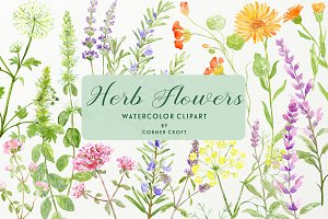 Watercolor Herb Flower Clipart
