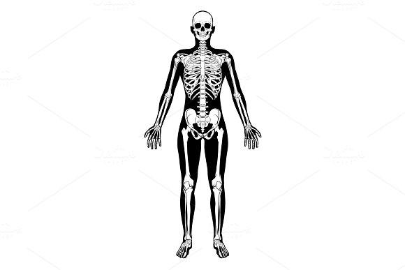 Human Skeleton Figure Medical