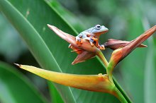 flying frogs, flying frogs on twigs by  in Animals
