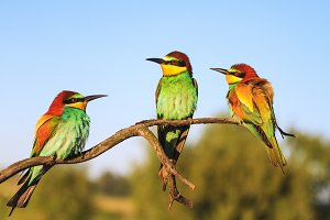 Exotic birds are sitting on a branch